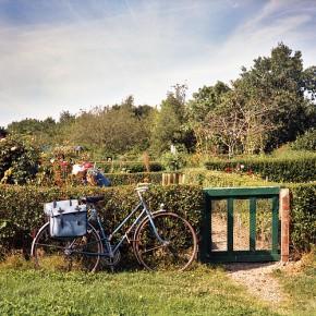 Véritables lieux conviviaux, les jardins familiaux