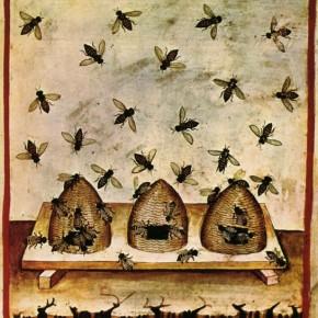 Pollinisation. N°580