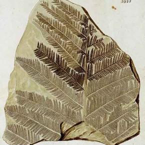 Dario de Franceschi, l'évolution du couvert végétal.