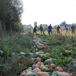 Reportage sur le travail collectif en agriculture.