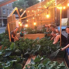 Craque-Bitume, un collectif d'écologie urbaine à Québec.