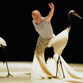 Luc Petton, chorégraphe d'oiseaux. N°816