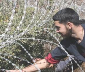 Résistances de la paysannerie palestinienne. N°839