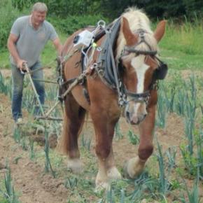 Stéphane Gallais, l'utilité du cheval dans le cadre écologique.